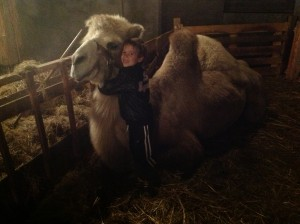 kamelen knuffelen