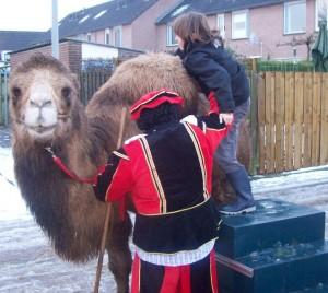 kamelen ritjes 1