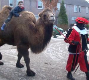 kamelen ritjes 2