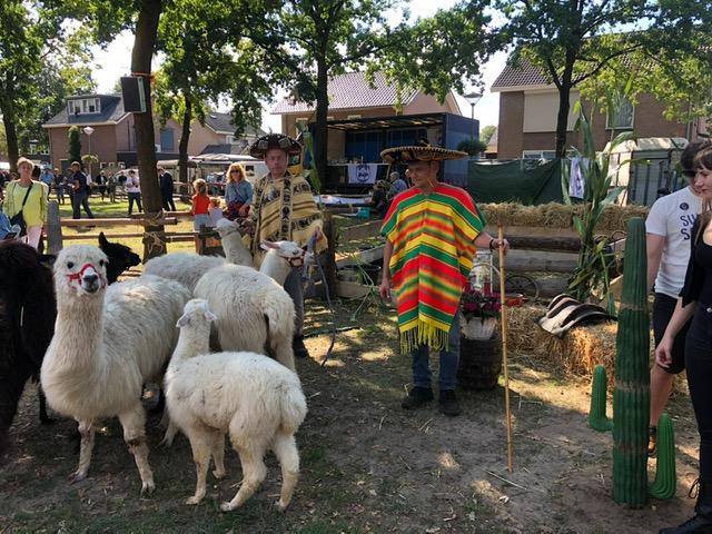 Alpacahoeden-