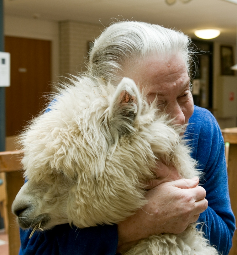 Knuffelfarm-mevrouw-knuffelt-alpaca