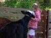 Kinderboerderij-214