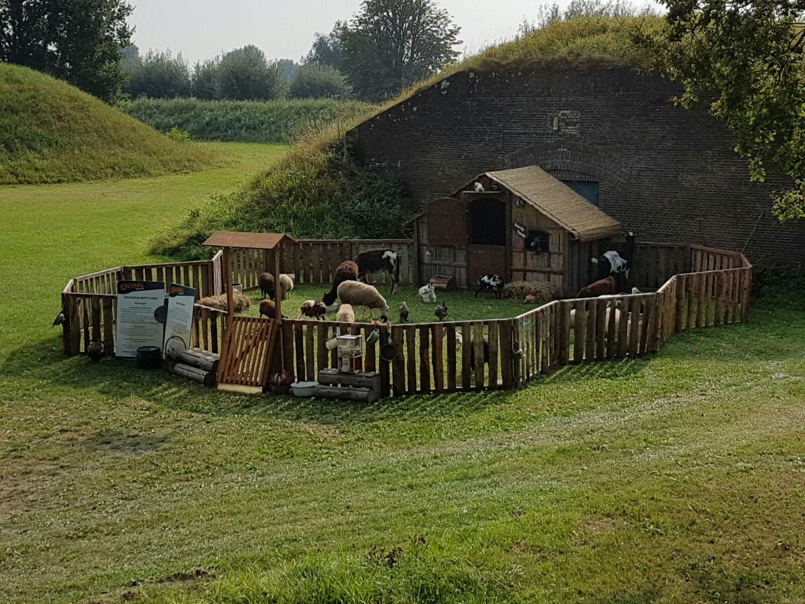 Kinderboerderij-