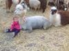 Kinderboerderij-6