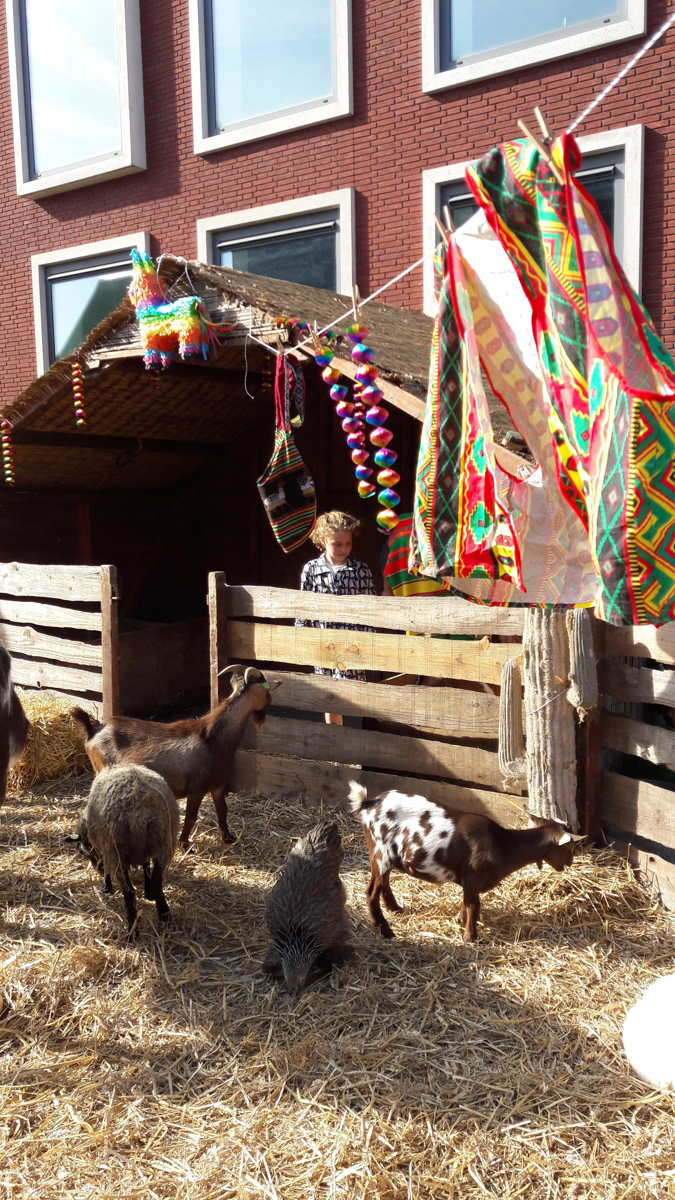 Mexicaanse-boerderij-5