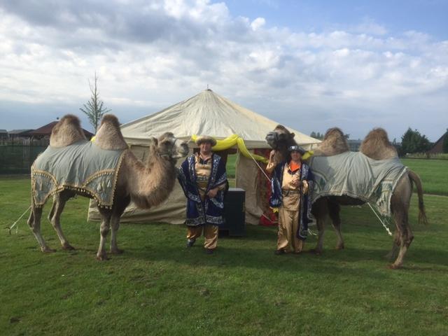 Kamelen-met-Sahara-tent
