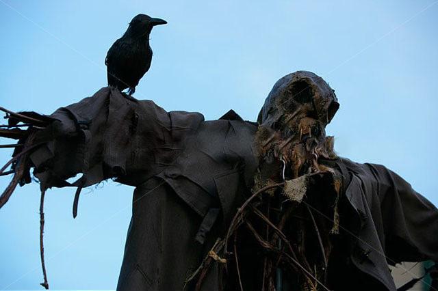 Raaf of uil op vogelverschrikker
